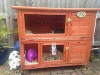 3 female guinea pigs and two tier wooden hutch