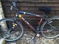 Adult hybrid bike