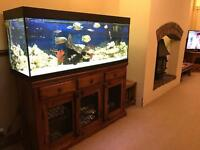 Juwel 400 5ft fish tank