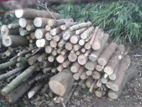 CONIFER LOGS FREE TO COLLECT