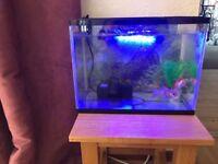 2 goldfish and glass tank