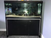 Fluval Roma 240 Fish Tank pic doesn't do it justice
