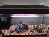 Fluval 120L Fish Tank comes with gravel and accessories and two fish