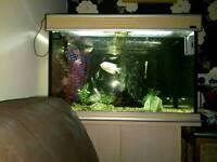 Aqua one acquiesce fish tank