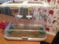 Finches with cage & accessories