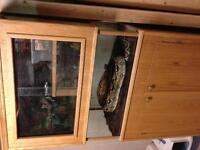Red tail Boa constrictor