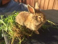 BUNNIES FOR SALE..REDUCED PRICE! READY TO LEAVE NOW