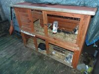 RABBITS AND HUTCH FREE TO GOOD HOME
