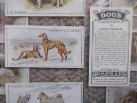 John Player's cigarette cards - full set of 50 Dogs