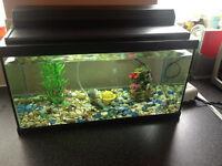 FISH TANK with built in light,2ft x 1ft,about 50 litresgravel,air pump,ornament,plastic plant good