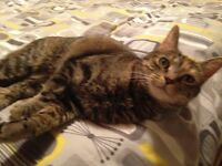 A loving home for Agatha female neutered 4 year old cat