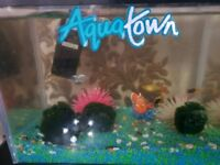 3 Fish with 9 L Aqairum up and runing
