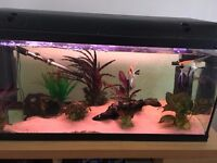 Fish tank for sale without stand