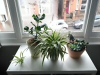 3 indoor plants with pots