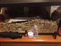 2 female gerbils with tank and accessories