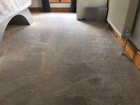 Beige Carpet 5.2mx7.4m luxurious 18mm Pile - Good condition + Cloud 9 Underlay