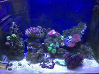Live rock and corals from my marine tank