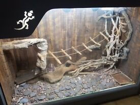 Large viv for lizards