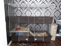 2 baby boy rabbits with very large 2 storey cage on wheels