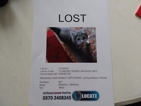 Missing Male Cat Salhouse NR13 6SA