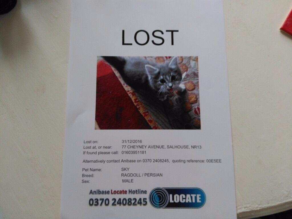 Missing Male Cat Salhouse NR13 6SA