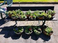 Hanging baskets and pots