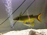 2 large sun-cat fish