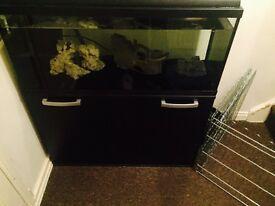 Tropical fish tank