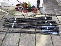 6ft Black Bamboo Canes - Garden bean poles x 84