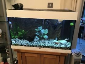 Jewel Rio 125 Fish Tank
