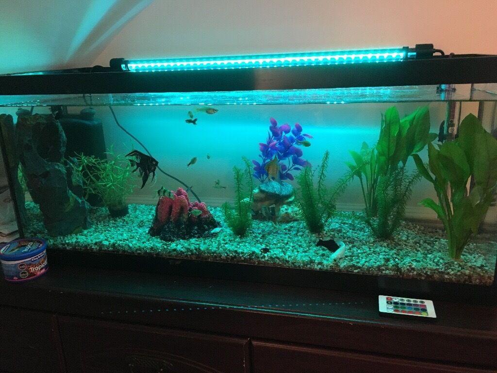 Aquarium fish tank northamptonshire - Fish Tank 140