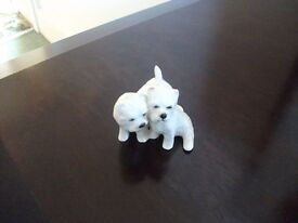 Cream West Highland Terriers made by Beswick England