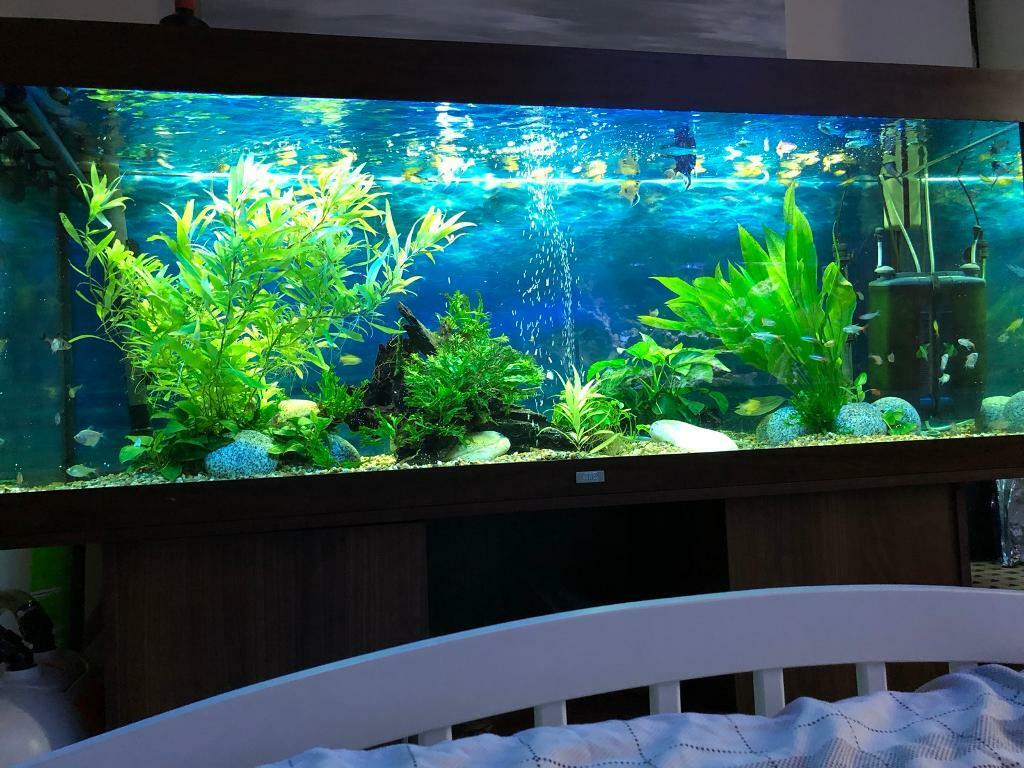 5foot Long Juwel Rio 400 Fish Tank With All Equipment You