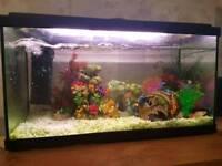 48ltr Fish tank