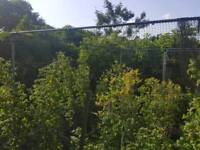 Fruit growing Cage, net, multiple fruits plants and asparagus