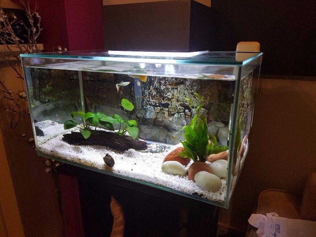 Fluval edge aquarium 23l stylish contemporary fish tank for Contemporary fish tank