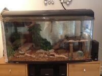 Large vivarium tank with loads of accessories
