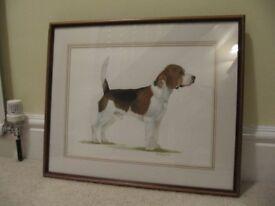 Original watercolour of a Beagle.