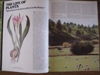 The Encyclopedia of The Plant Kingdom