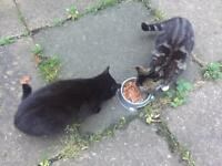 FREE FREE 2 kittens 1 male 1 female give to good home