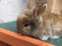 Adorable bunnies for sale