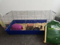 2 female guinea pigs.