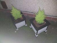 2x HANDMADE WINTER PLANTERS incl TREE'S *LAST PAIR LEFT*