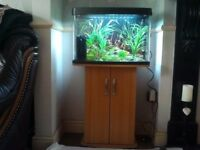 Fish Tank And Stand . Panorama 64 litre