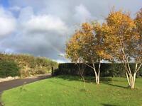 Nature-Friendly Lawn Care