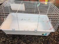 House guinea pig