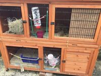 2 Rabbits with hutch, thermal cover, drinking bottle, feeding bowl etc ( All you need to re home )