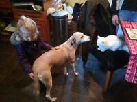 Cross bred puppies dad spaniel mum greyhound, saluki, whippet.