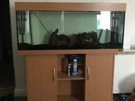 240L fish tank