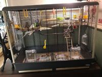 2 Budgies with large cage and lots of Accessories